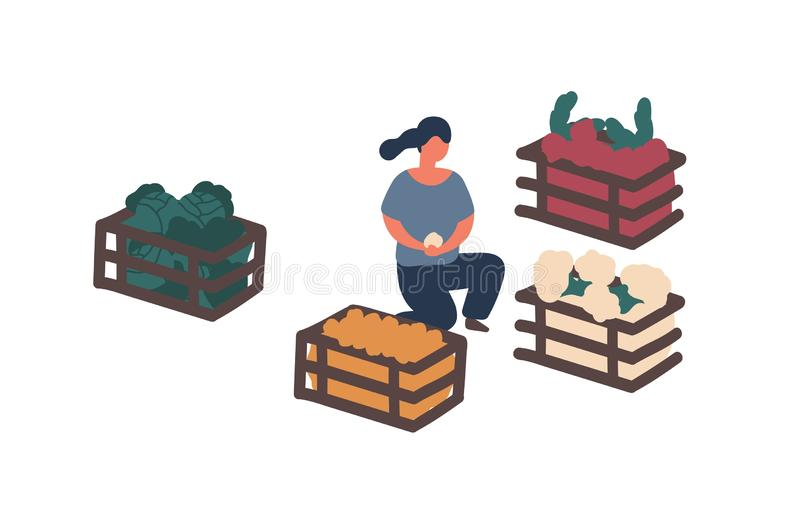 Girl collecting harvest in containers flat vector illustration. Woman sorting farm crop isolated design element. Organic. Vegetables buying, choosing. Potato royalty free illustration