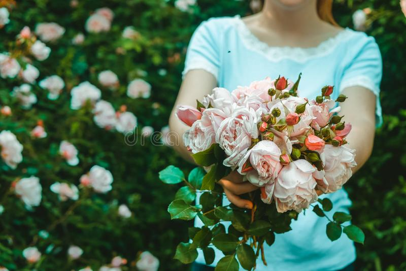 Girl collects a bouquetof roses in the open air royalty free stock photo