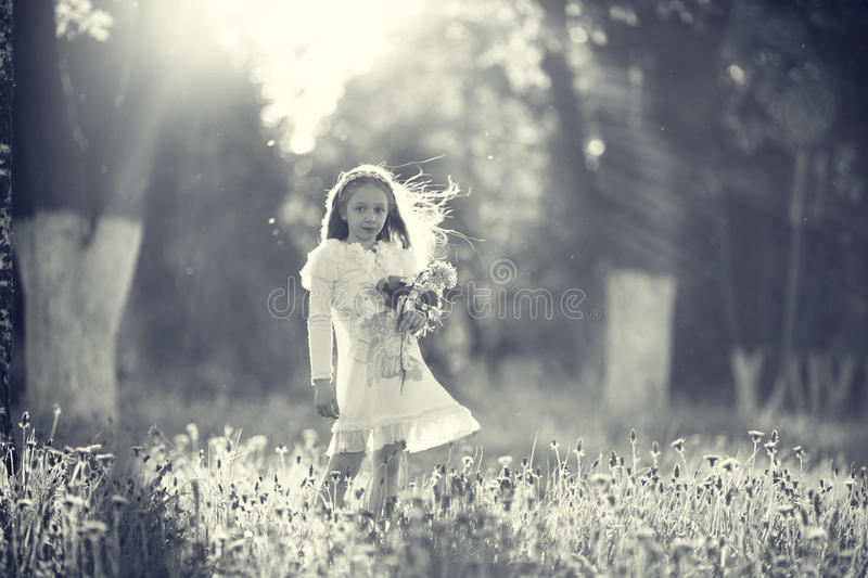 Girl collects flowers. In park royalty free stock image