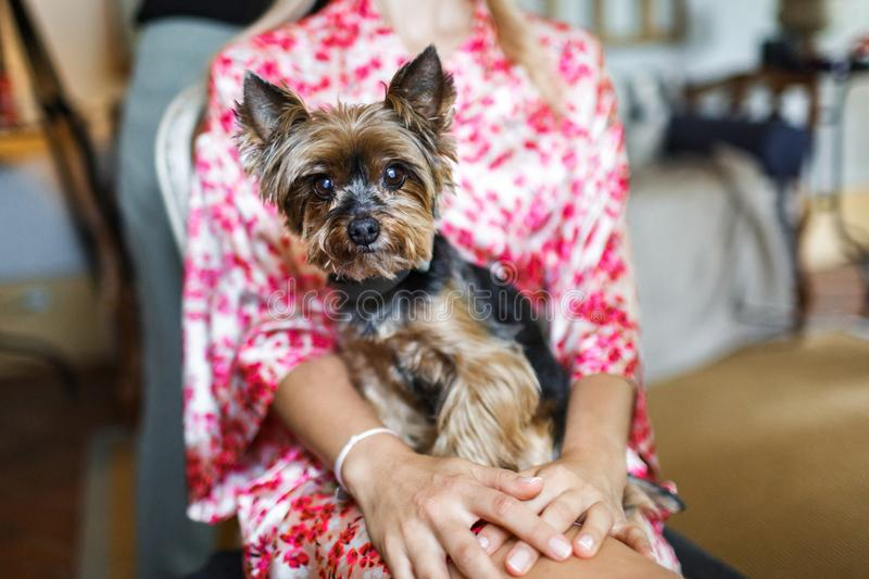 Girl in a colored robe and her cute dog, close-up stock photography