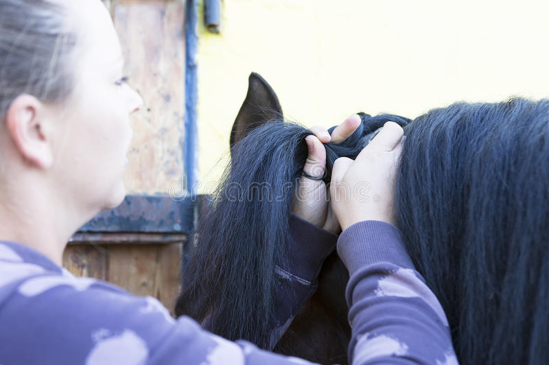 Girl combing a horse mane. Closeup of the hands of a young woman is braiding a mane of a purebred brown horse at the byre - focus on the left thumb royalty free stock image