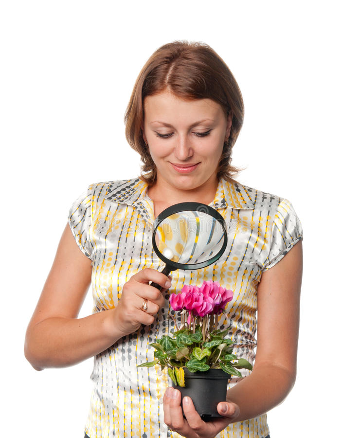 Girl considers cyclamens through a magnifier.  royalty free stock photography