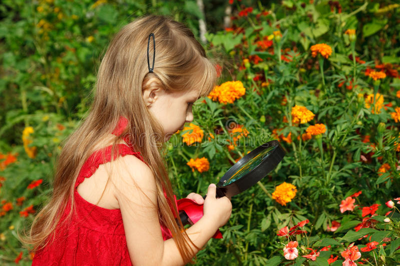 Girl considers flower through magnifying glass. Little girl in red dress considers flower through magnifying glass stock photography
