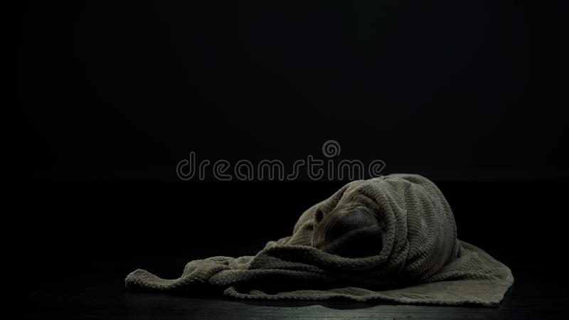 Girl covered in plaid lying alone in dark room, social problem of homeless child. Stock photo royalty free stock photo