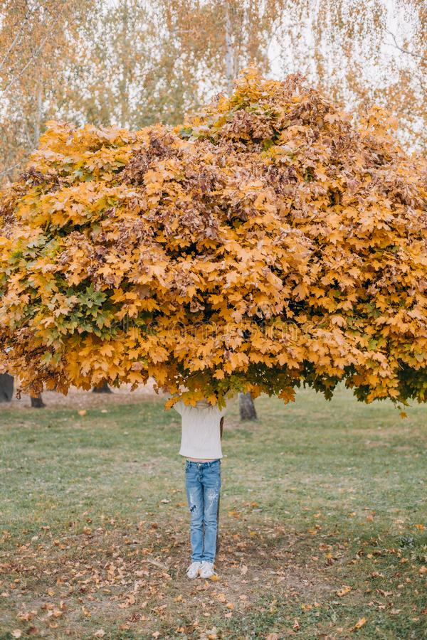 Girl covers face maple autumn leaf gold. Pretty girl covers her face with maple autumn leaf gold, people, portrait, eye, background, colorful, fall, leaves royalty free stock photography