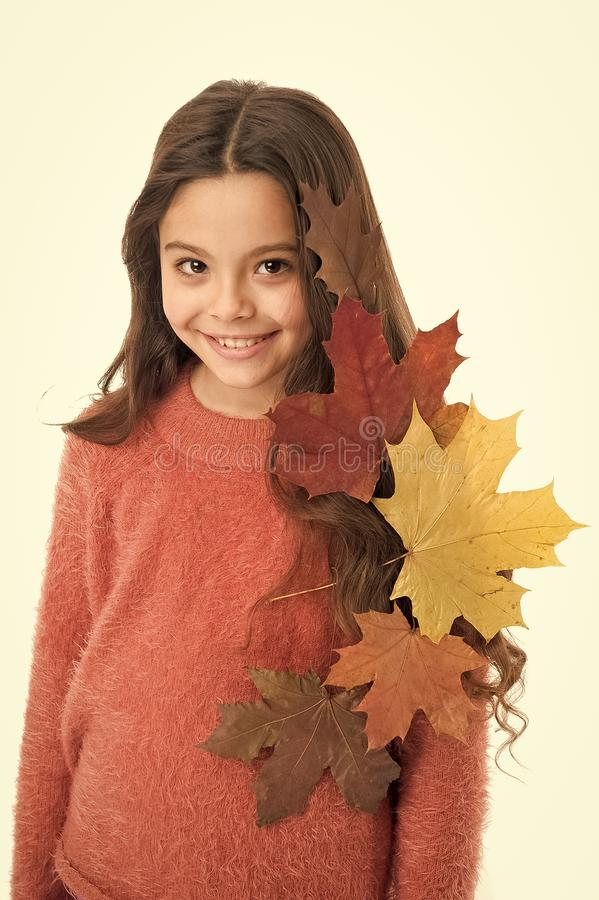 Girl cute kid with fallen leaves isolated on white background. Child enjoy fall season. Dry maple leaves in her royalty free stock photography