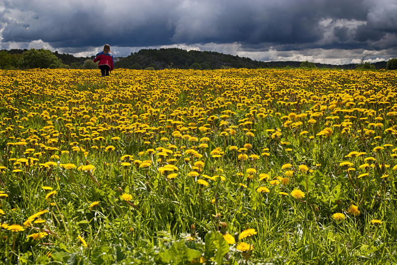 Girl in Dandelion field royalty free stock photos