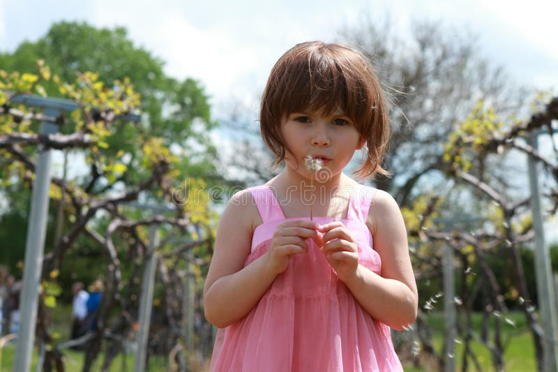 Girl with dandelions royalty free stock images