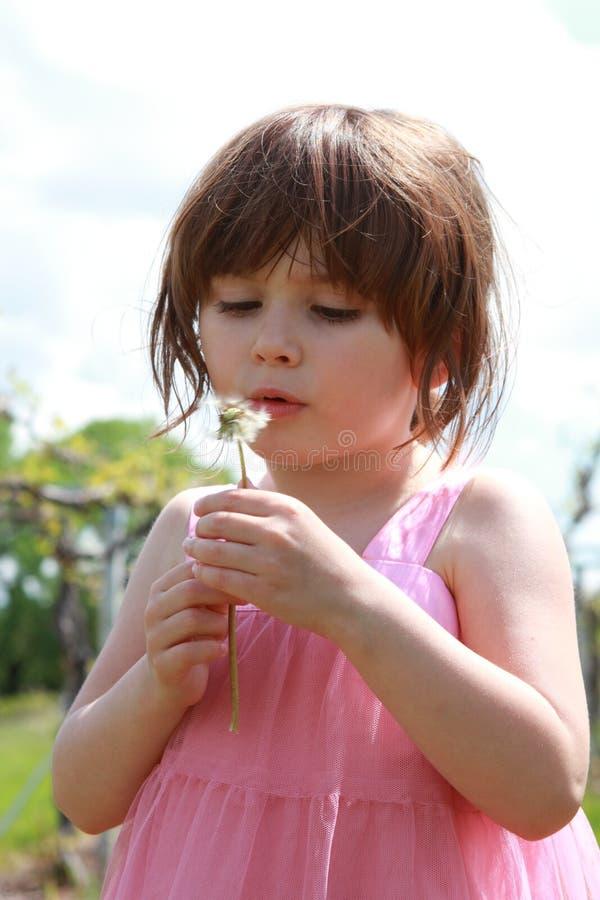 Girl with dandelions stock photo