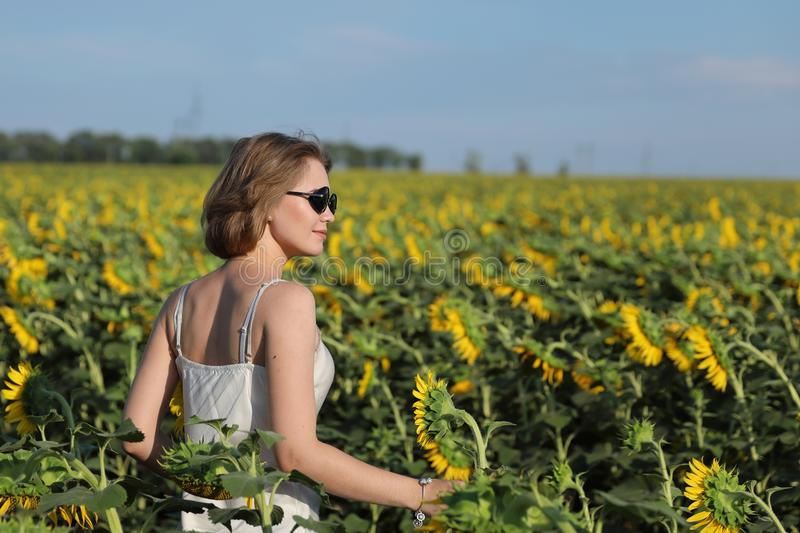 The girl in dark glasses walks on a sunset on the beautiful field of the blossoming sunflowers. royalty free stock image