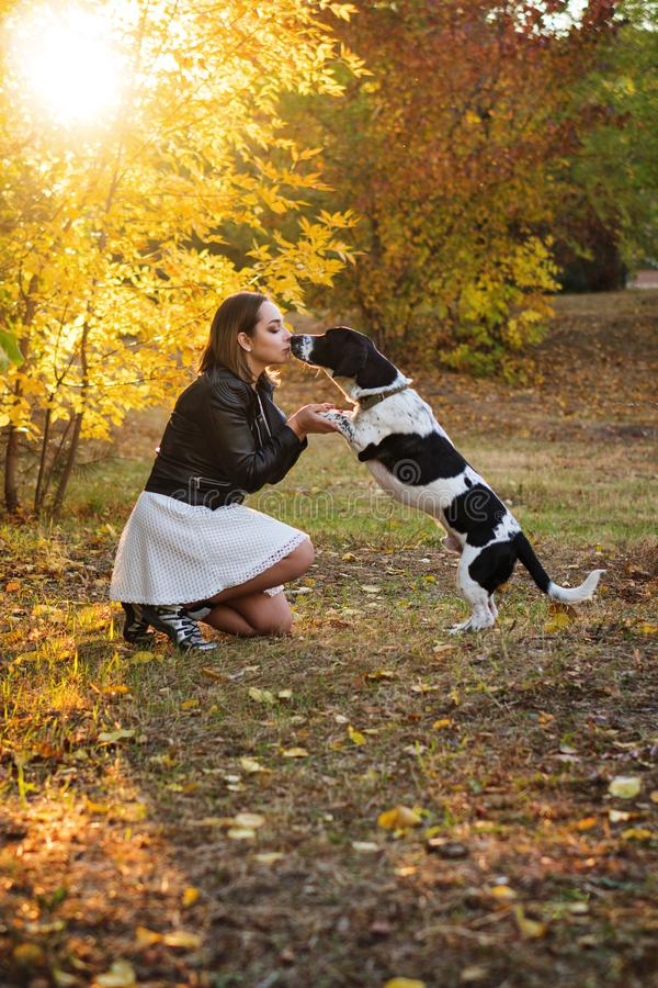 Girl and dog in autumn park. Sweet young girl and dog walking in autumn park. Dog is spotted, hunting, fold and short-legged. Girl in white dress and black stock photos