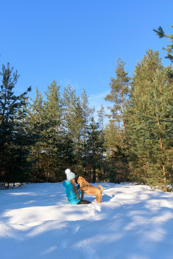 Girl with a dog breed Shar Pei. in the winter forest. a walk in the winter.  stock photos