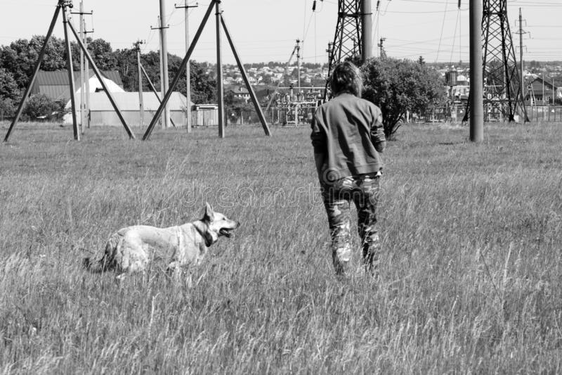 Girl with a dog in a field on the background of a power line royalty free stock image
