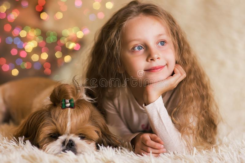 Portrait of thoughtful girl with long hair with a puppy Shih Tzu. royalty free stock image
