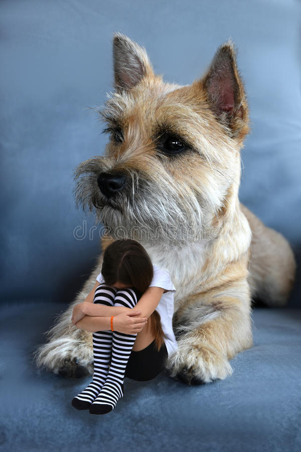 Girl and dog. Sad teenage girl cowering between the paws of a gigantic cairn terrier stock photography