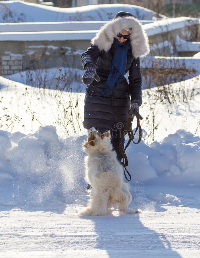 Girl with dog on snow in winter royalty free stock image