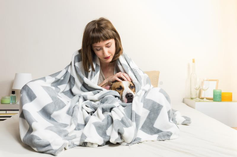 Girl with dog in warm blanket in bed. Young female petting her lazy staffordshire terrier dog in throw plaid in minimalistic bedroom environment royalty free stock photo