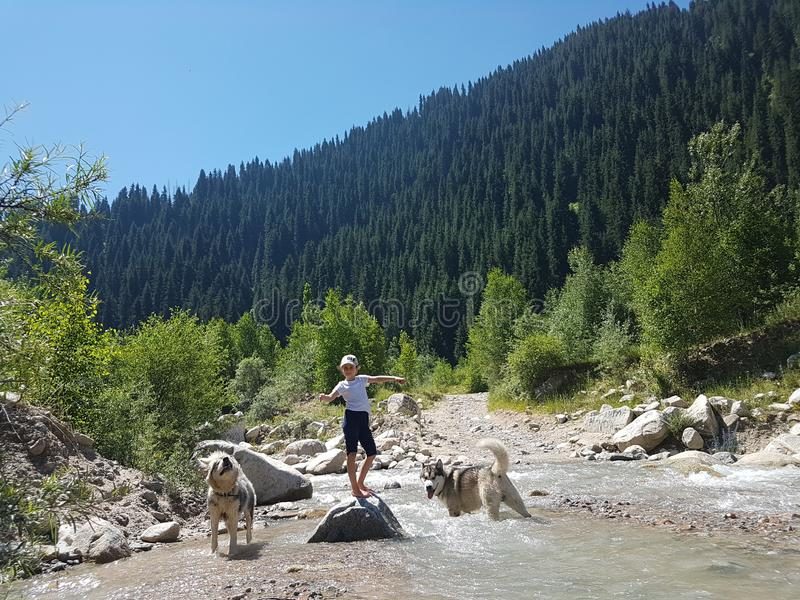 Girl and dogs Malamutes on a mountain river. stock photo