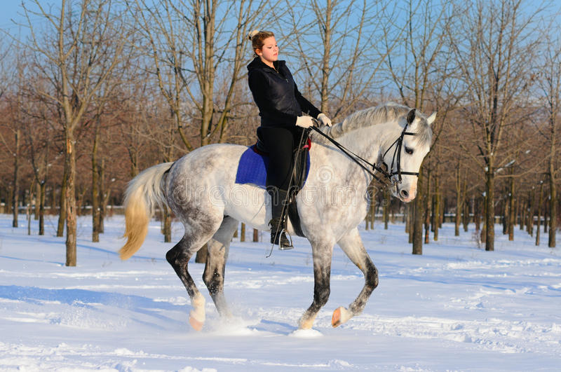 Download Girl On Dressage Horse In Winter Stock Photo - Image: 13070196