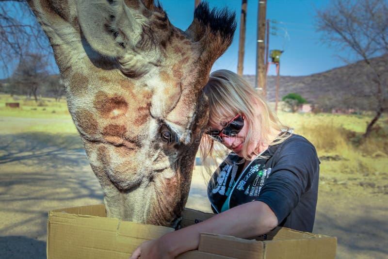 Download Girl  giraffe stock photo. Image of animals, woman, desert - 41130622