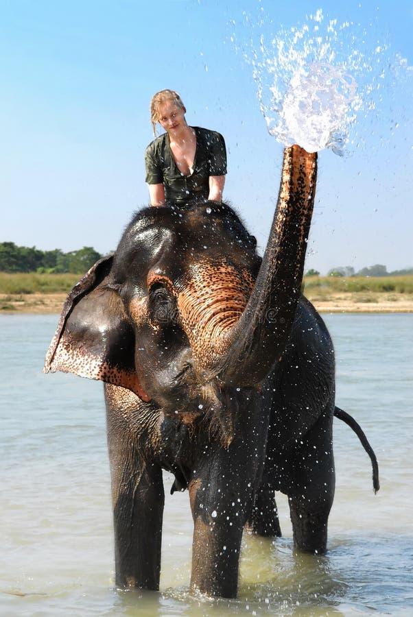 Girl on elephant stock images