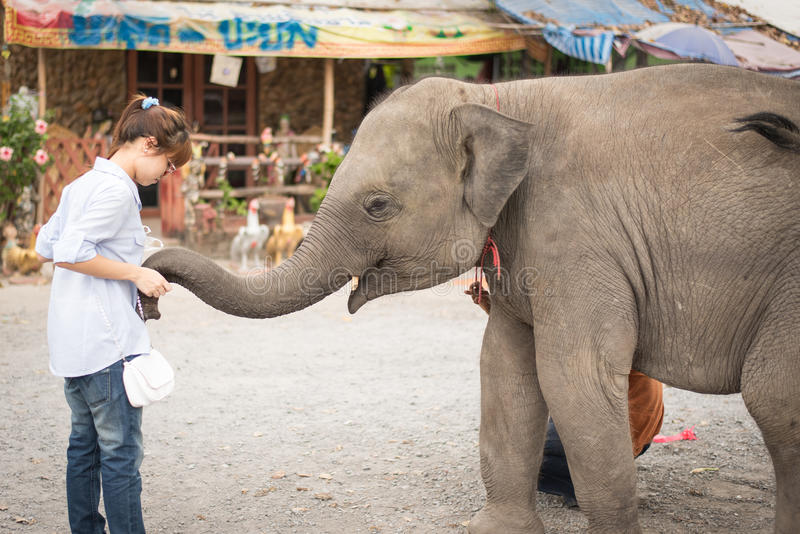 The girl & elephant royalty free stock photos