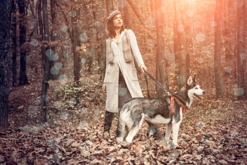 Girl enjoy walk with husky dog. Siberian husky favorite pet. Animal husbandry. Girl pretty stylish woman walking with stock photo