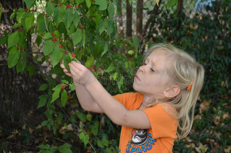 Download Girl examines berries stock image. Image of investigate - 21731429