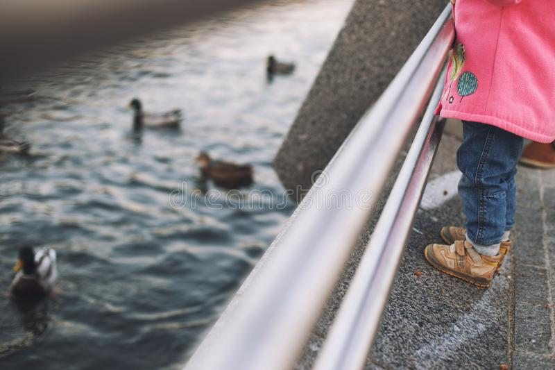 Girl feed the ducks stock photography