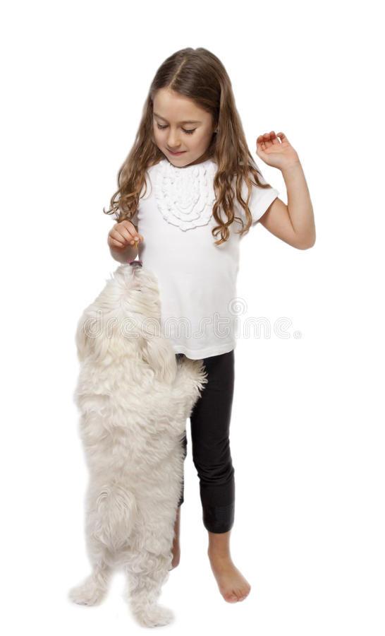 Girl feeding dog royalty free stock photography