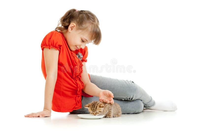 Girl feeding homeless alley cat. In studio stock photography
