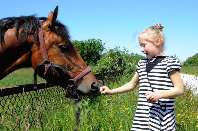 Girl feeding a horse royalty free stock image
