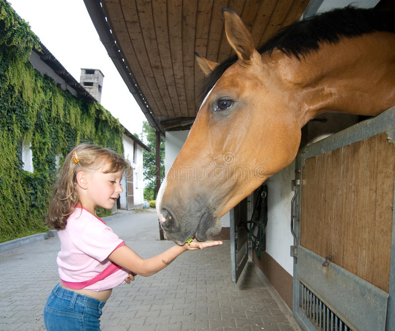 Download Girl feeding horse stock image. Image of feed, pretty - 22774335