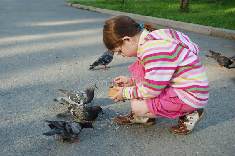 Girl feeding pigeons royalty free stock photos