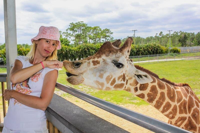 Download Woman touching giraffe stock image. Image of holidays - 41755567