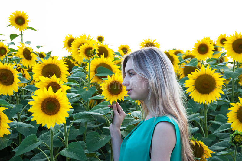 Girl on the field of sunflowers. Beautiful girl on the field of sunflowers royalty free stock photography