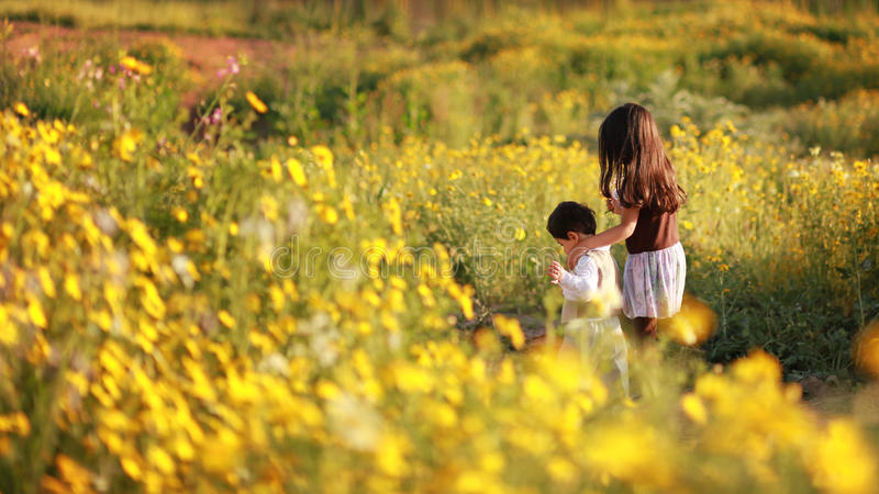 Girl in the flower field. Sister and brother taking a stroll in the flower field royalty free stock images