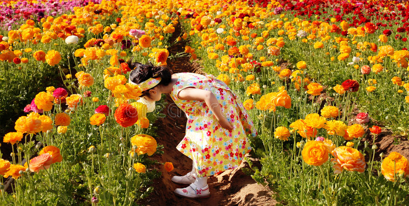 Girl in the flower field stock photography