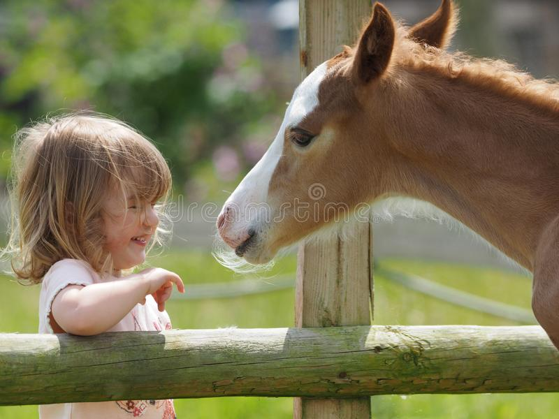 Girl and Foal royalty free stock photos
