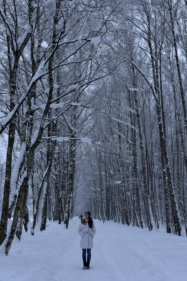Girl on a forest road in winter royalty free stock photos