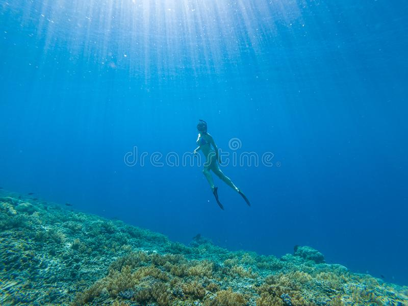 Girl freediving in clear sea  Southeast Asia stock photos