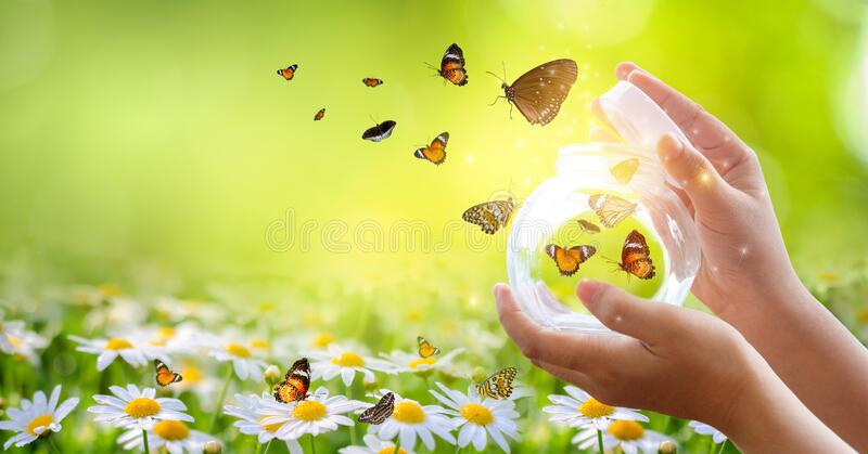 The girl frees the butterfly from the jar, golden blue moment Concept of freedom. The girl frees the butterfly from  the jar, golden blue moment Concept of stock image