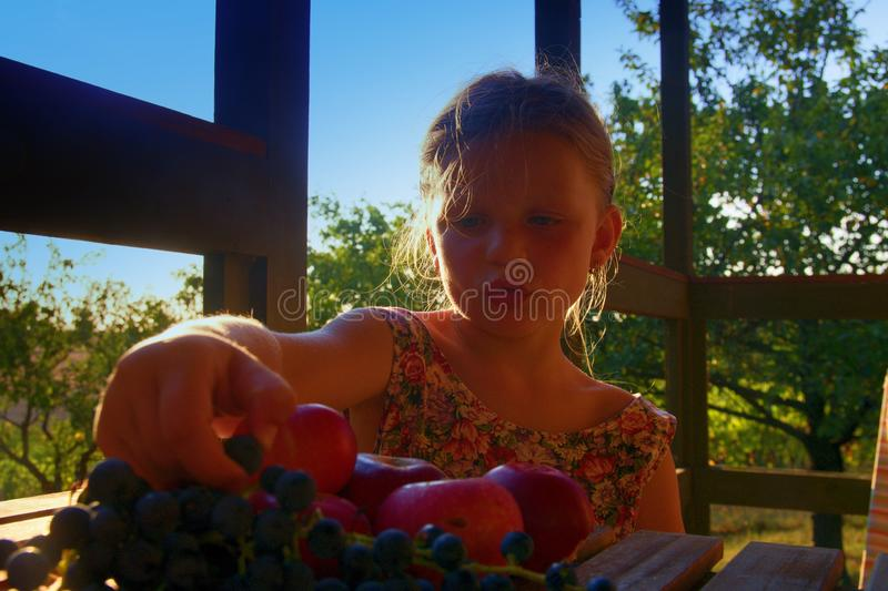 Girl with fruit in the garden. Beautiful little farmer girl holding and eating organic fruits, grapes, apples. The royalty free stock photography