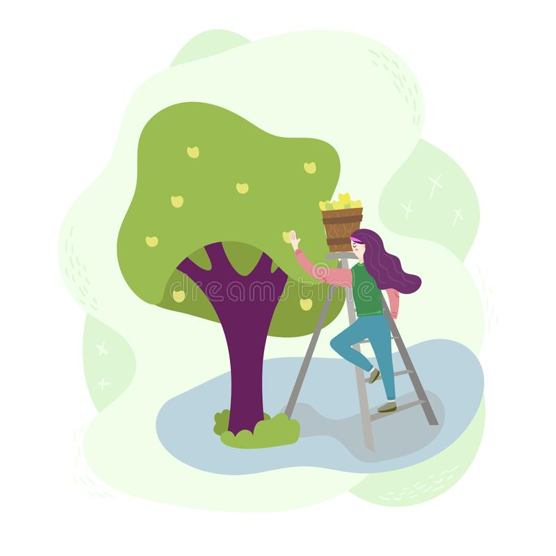 The girl in the garden stands on the stairs and harvested apples from a tree in a basket. Farm worker scene. Isolated vector illustration