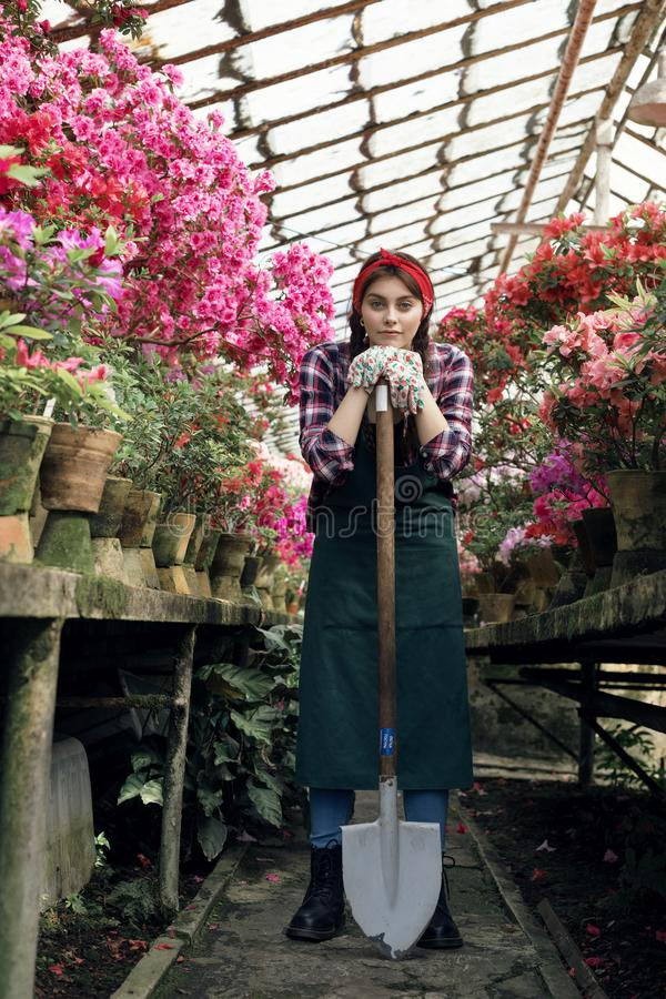 Girl gardener in apron and gloves with a big shovel in greenhouse, looking at camera. Flower care and watering, soils and fertilizers, greenhouse flowers stock photo