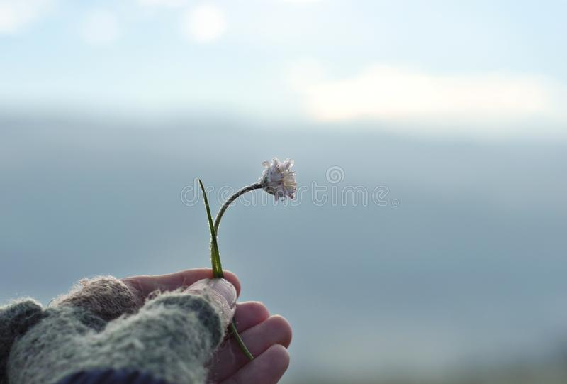Girl with glove hand holding a beautiful white Daisy on the horizont. Beautiful tranquil nature represent peaceful moment stock photography