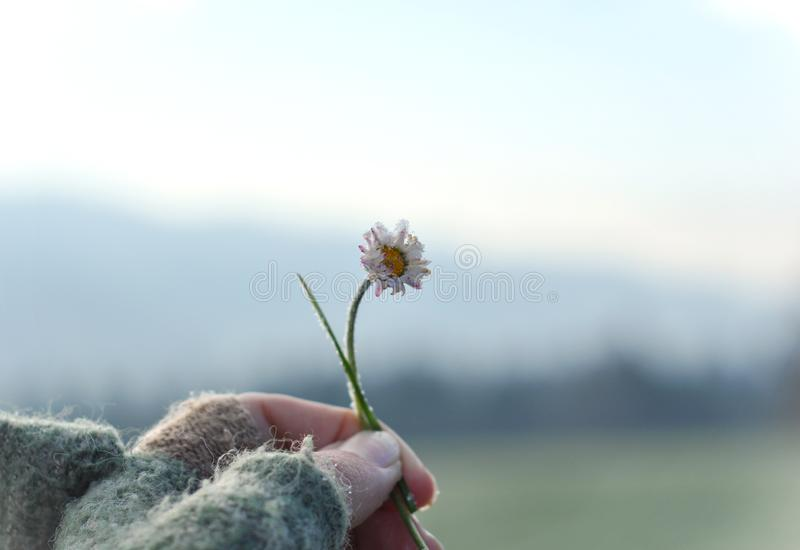Girl with glove hand holding a beautiful white Daisy on the horizont. Beautiful tranquil nature represent peaceful moment stock image