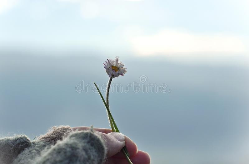 Girl with glove hand holding a beautiful white Daisy on the horizont. Beautiful tranquil nature represent peaceful moment stock photo