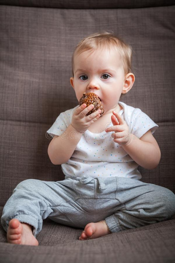 Girl gnawing a pine cone. Portrait of a baby girl gnawing a pine cone royalty free stock photography