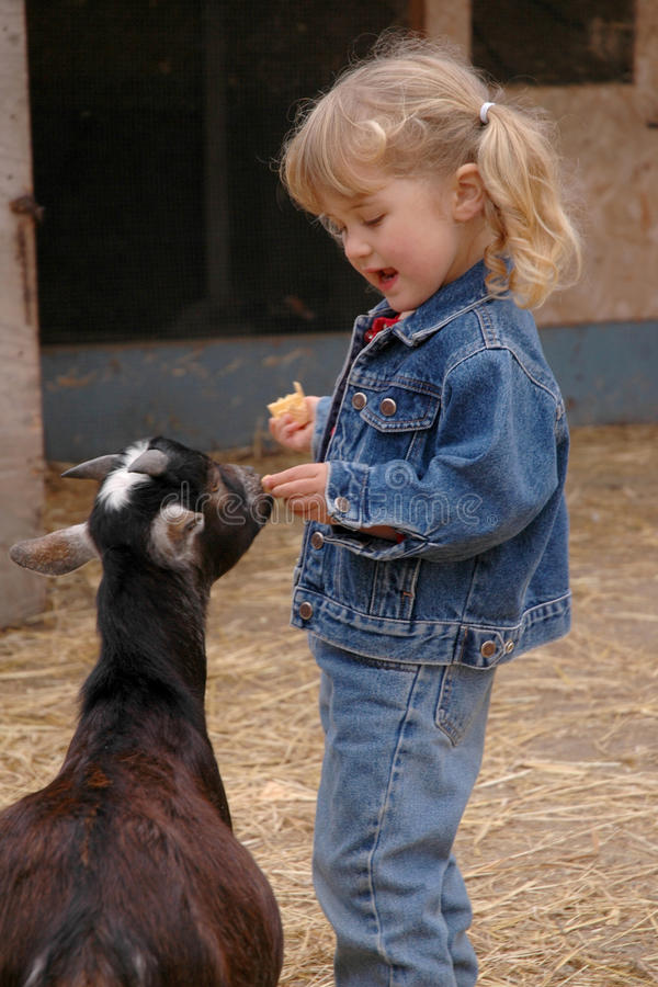 Download Girl and goats stock image. Image of denim, petting, arms - 16086595